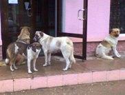 Бездомные собаки в Евпатории