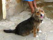 пограничный пес Украина. Крым