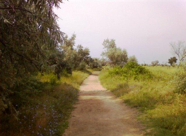 Евпатория тропа вдоль озера Мойнаки