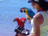 Попугаи на службе  у фотографов