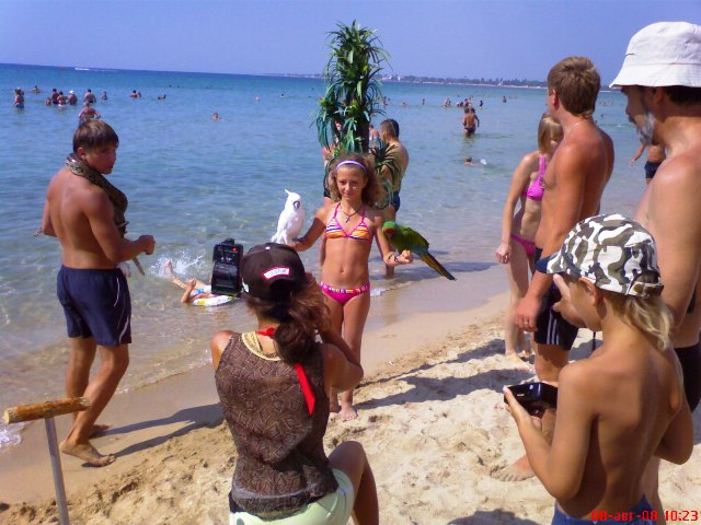 пьяные обезьяны на пляже